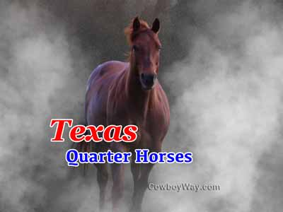 A horse in the mist representing Quarter Horses in Texas at CowboyWay