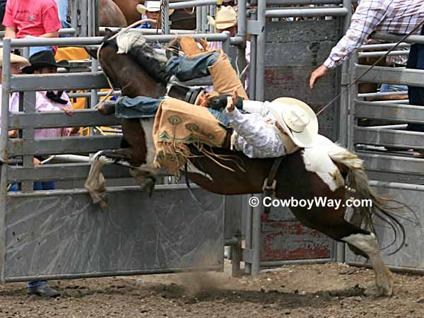 A bareback bronc rider comes out of the chute
