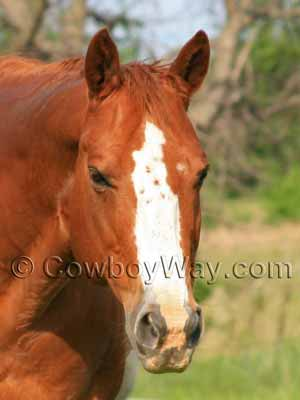 Horse face markings: Blaze