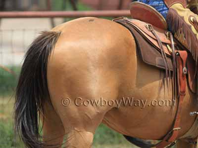 Buckskin horse color