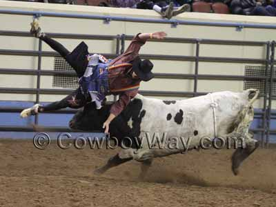 A rodeo bull fighter gets thrown into the air by a bull