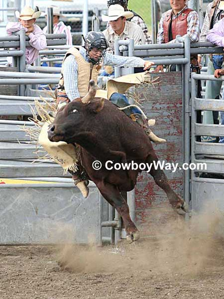 A bull rider hangs on as a red bull leaves the chute