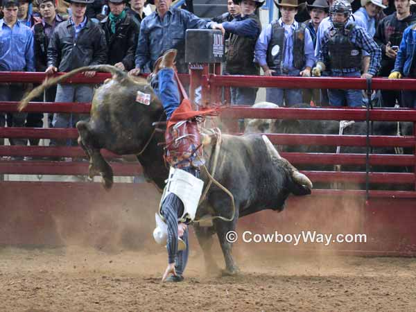 A bull rider wrecks and gets tangled with the bull