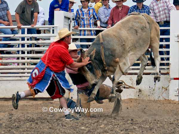 Bull riding wreck: A rodeo clown tries to save a bull rider from a bull
