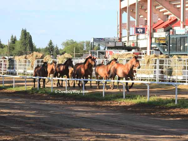 Broncs trotting at Frontier Park