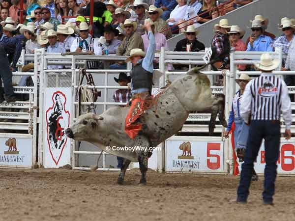 Bull rider Chris Roundy Panguitch, UT on bull Delta Dawn