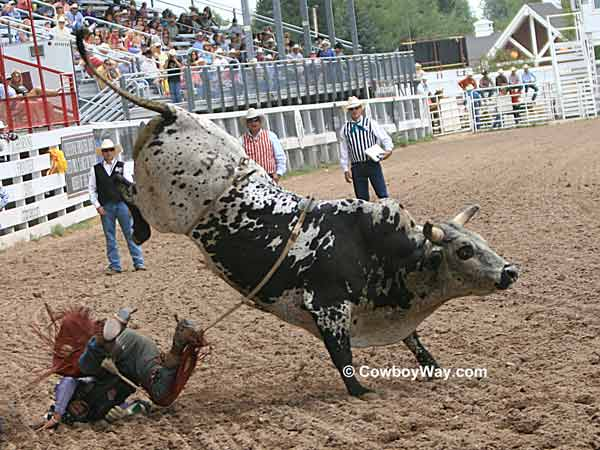 Bull rider Ryan Shanklin and bull 397
