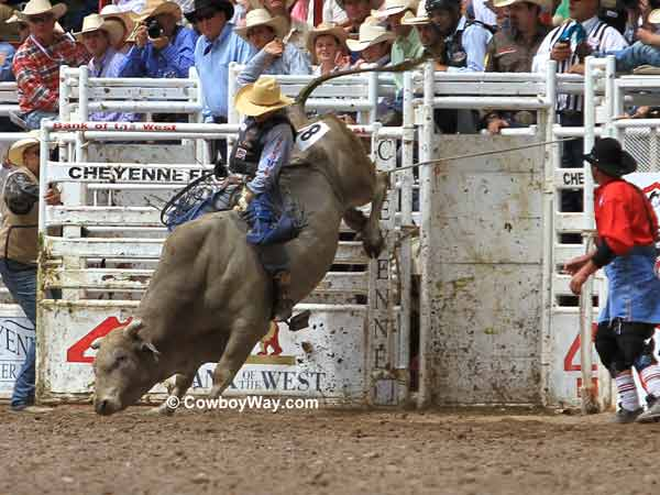 Bull rider Aaron Pass on 703