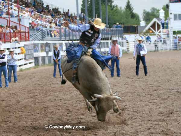 Riding a bull at the Cheyenne Frontier Days Rodeo