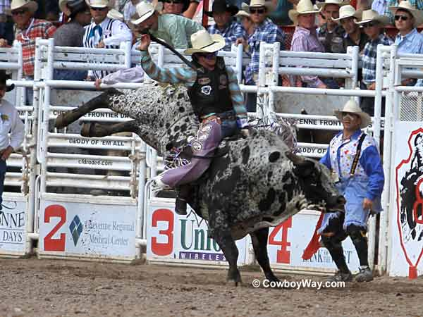 A speckled bucking bull