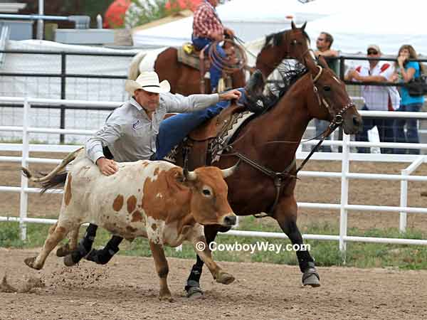 Steer wrestling at the Cheyenne Frontier Days Rodeo