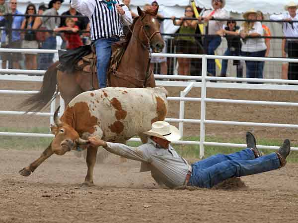 A steer wrestler ends his run unsuccessfully