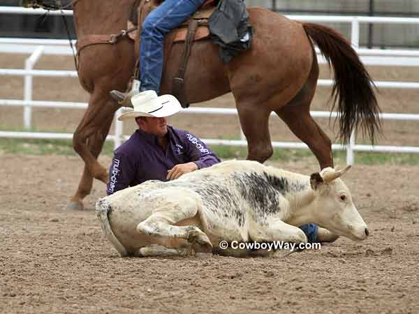 A steer wrestler completes his run successfully