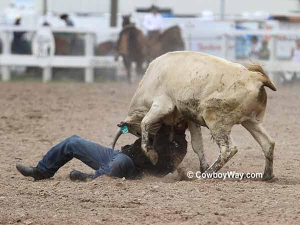 Steer wrestler Kyle Whitaker struggles with his steer wrestling steer