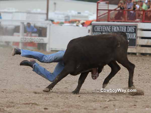 A steer gets a steer wrestler off of the ground