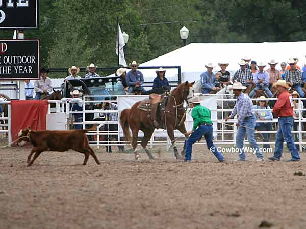 A tie-down roping calf lopes away