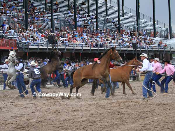 The start of the wild horse race