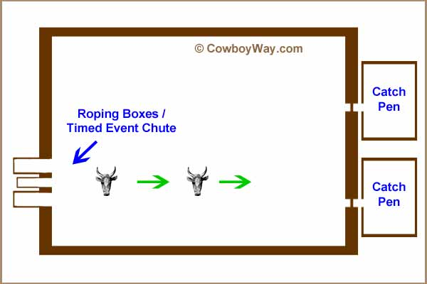An illustration of how cattle travel from the timed event chute to the catch pens