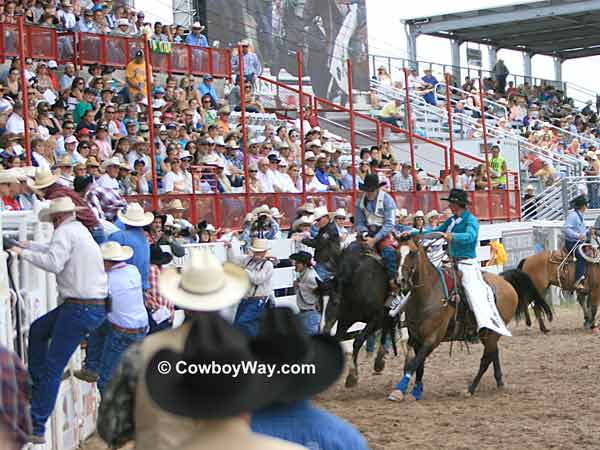 Pickup men move in on a bronc rider in front of the bucking chutes