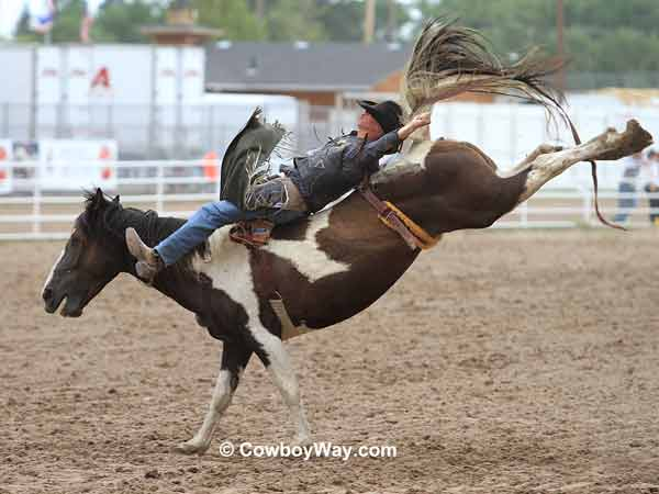 Bareback bronc riding at Cheyenne Frontier Days