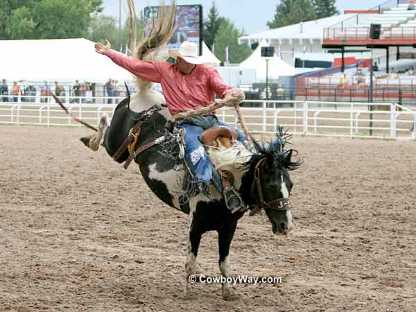 A saddle bronc rider on a spotted bronc