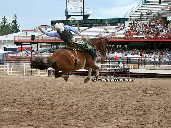 A saddle bronc jumps high into the air