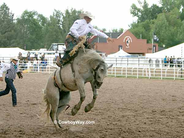 A gray saddle bronc bucks at the Cheyenne Frontier Days Rodeo