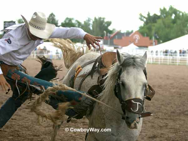 Saddle bronc rider gets bucked off