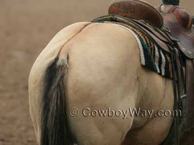 Dorsal stripe on a dun horse