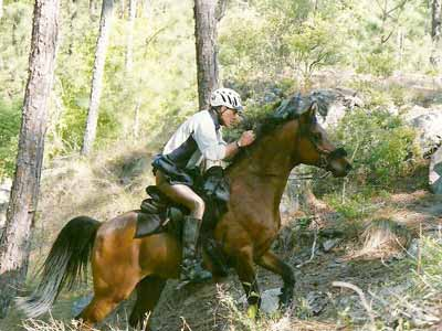 An endurance rider and horse