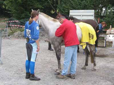 An unsaddled horse at a veterinary check point during an endurance ride