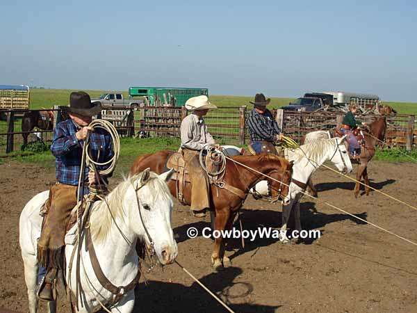 Four ropers hold their calves to be worked by the ground crew