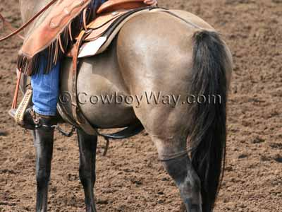 Grulla horse color
