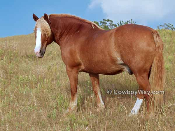 Horse picture of a retired ranch horse