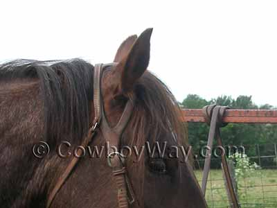 A fixed ear headstall