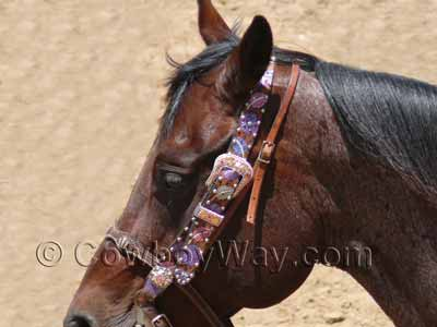 A fancy headstall with bling