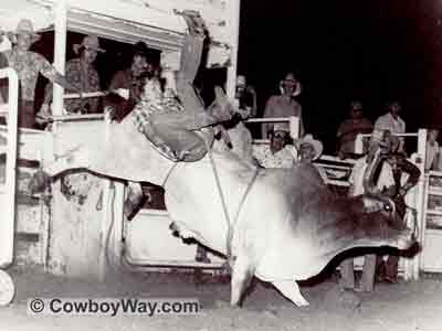 Black and white picture of Hooker the bucking bull