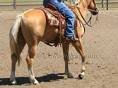 Horse colors: Palomino