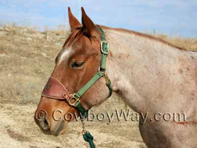 Horse colors: Red roan