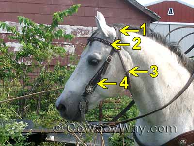 Headstall on a gray horse