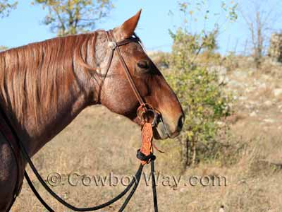 A horse with wearing a headstall with a snaffle bit