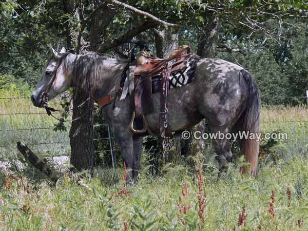 Horse picture: Gray ranch horse