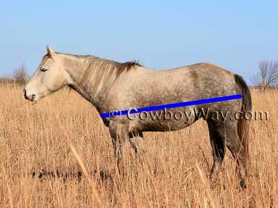 Horse weight: Measure horse length