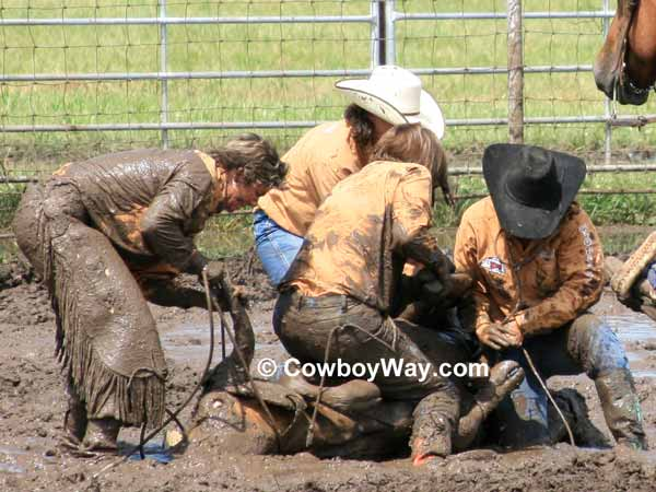 Four cowgirls covered in mud work to tie their steer