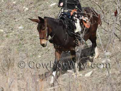 A saddled mule on a trail ride