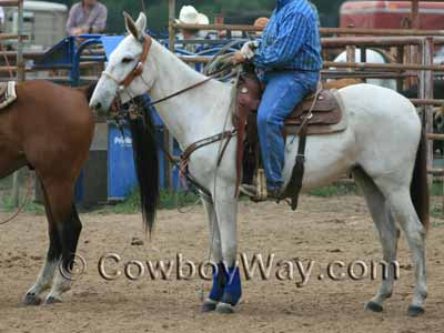 A gray mule wearing a roping saddle