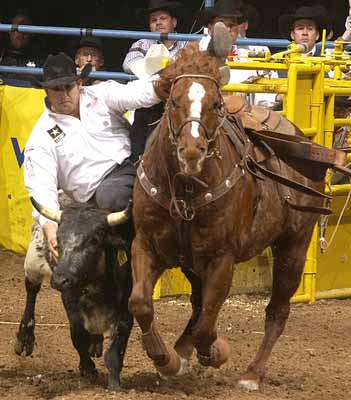 Luke Branquinho in the steer wresting at the National Finals Rodeo