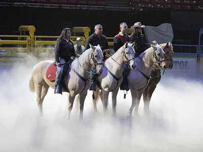 Horses rehearsing for the 2012 National Finals Rodeo