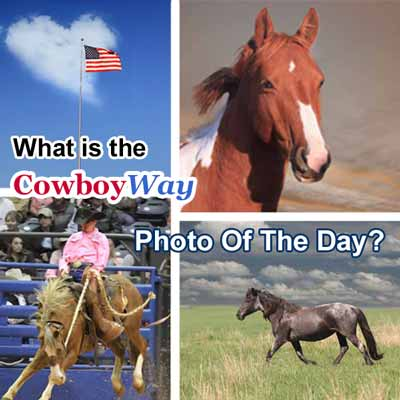 Photo of the day at CowboyWay.com