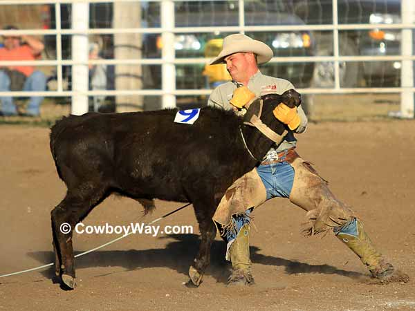 A cowboy works hard to mug a steer in a ranch rodeo